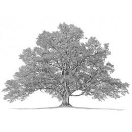 Best Genealogy Software
