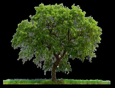 Genealogy Software Reviews